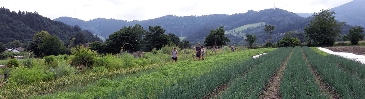 Solawi Freiburg Demeter Bio-Gemüse